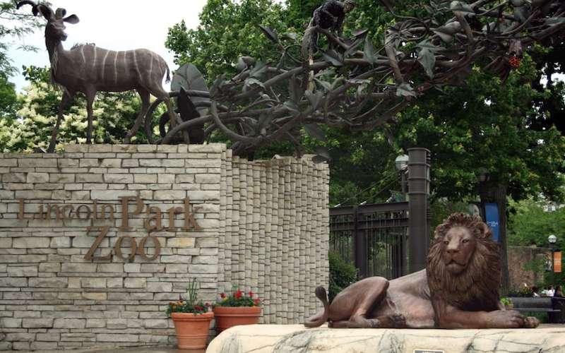 O que fazer com crianças em Chicago: Lincoln Park Zoo