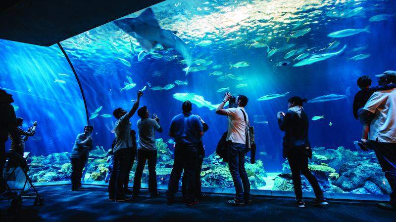 Shedd Aquarium em Chicago: visitantes