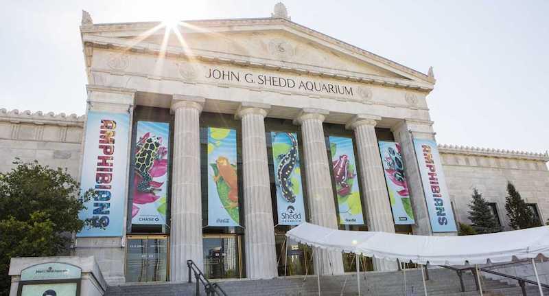 Pontos turísticos em Chicago: Shedd Aquarium