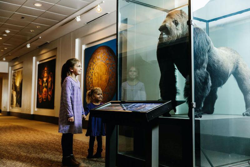 O que fazer com crianças em Chicago: Field Museum of Natural History