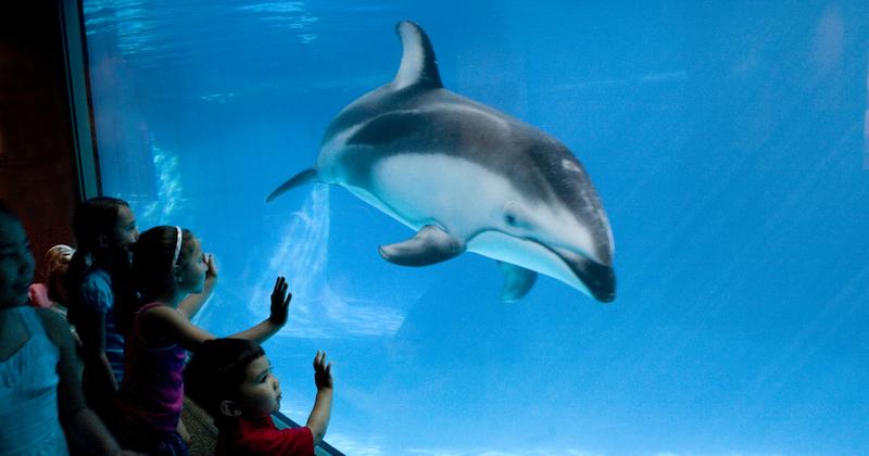 Shedd Aquarium em Chicago: crianças